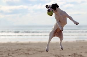 More than 30 State Park Beaches Open as Dog Exercise Areas Until May 18