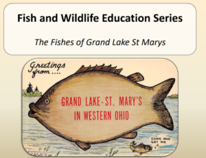 VIDEO: The Fishes of Grand Lake St. Marys